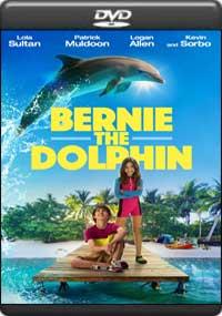 Bernie The Dolphin [ 8031 ]