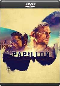 Papillon [ 7975 ]