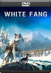 White Fang [ C-1388 ]