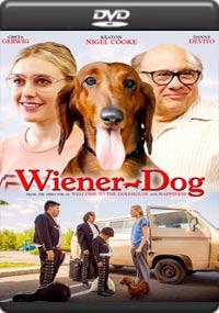 Wiener Dog [6966]