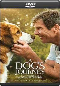 A Dog's Journey [ 8266 ]
