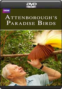 Attenborough's Paradise Birds [ 8254 ]