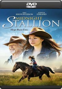 Midnight Stallion [5594]